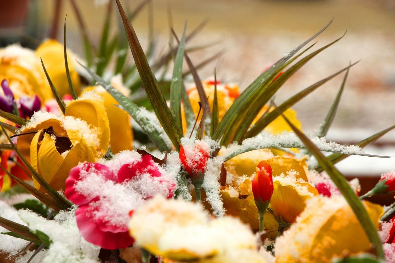 снег и цветы фото можно делать только