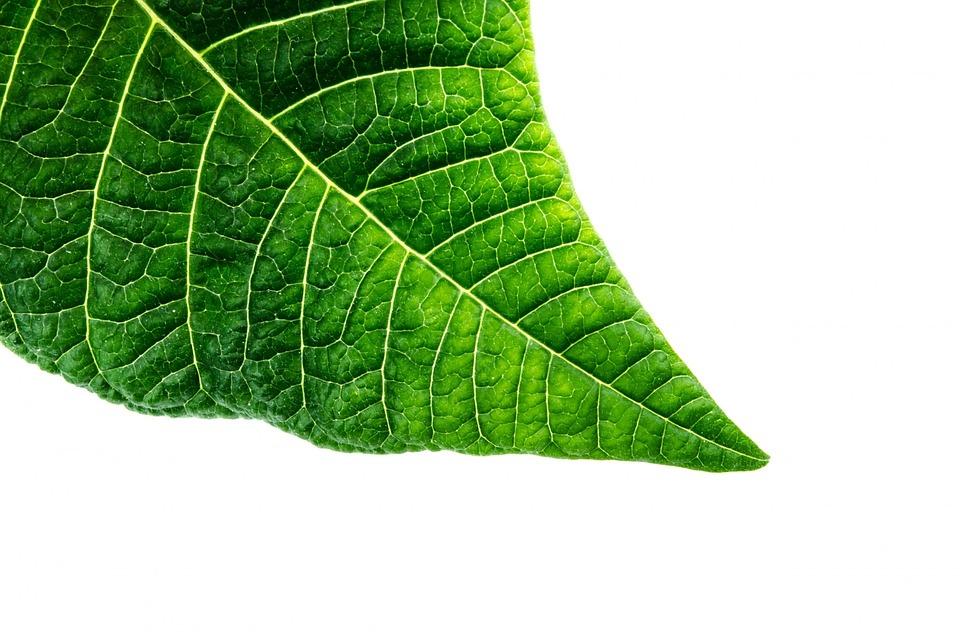 organic macro green free photo on pixabay
