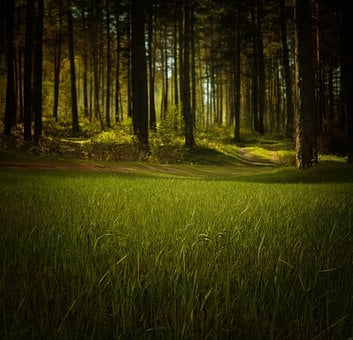 Forest, Nature, Trees, Grass, Green