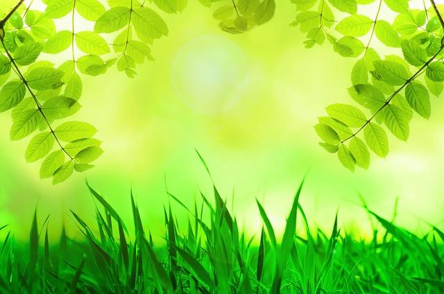 Single hijau daun 2014