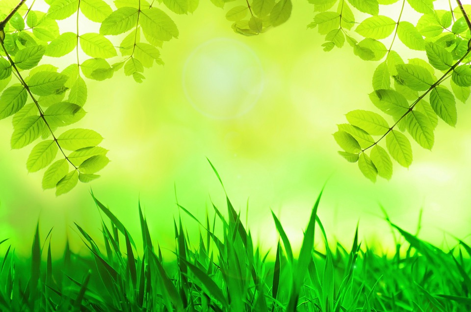 Free photo: Spring, Leaves, Green, Grass, Tree - Free ...