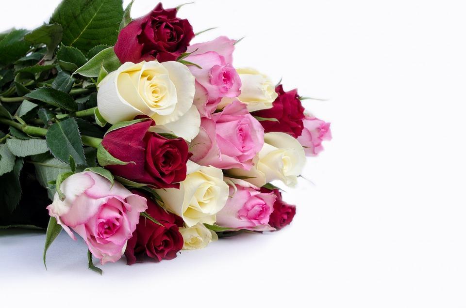 Flower flowers rose · free photo on pixabay