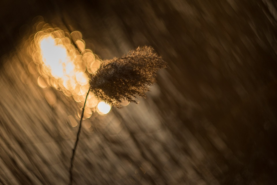 photo gratuite  coucher de soleil  r u00e9sum u00e9  abstrait - image gratuite sur pixabay