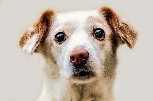 Dog, Animal, Friend, Loyalty, Sweetheart
