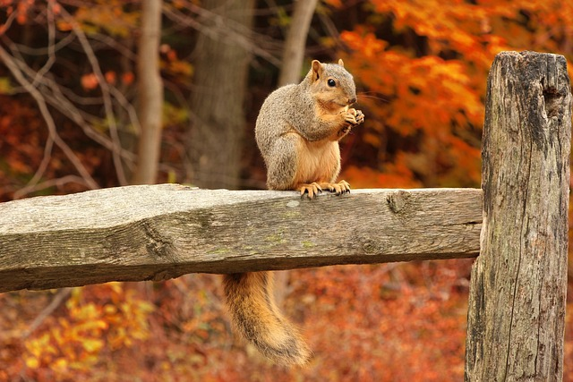 Free Photo Squirrel, Tail, Bushy Tail, Forest - Free -6715