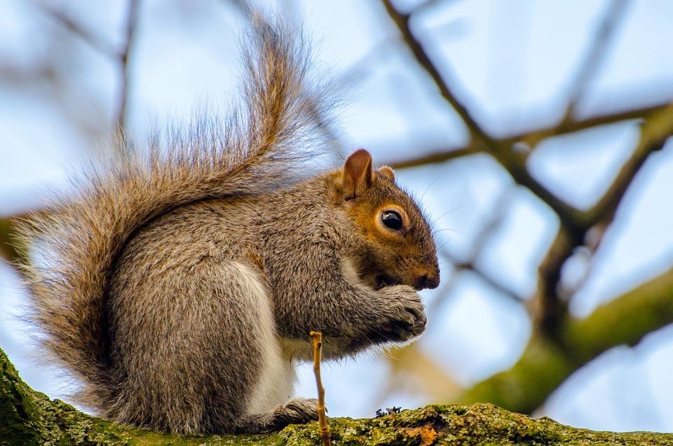 free photo animal squirrel tree mammal paw   free