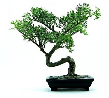 Bonsai, Tree, Green, Plant, Small