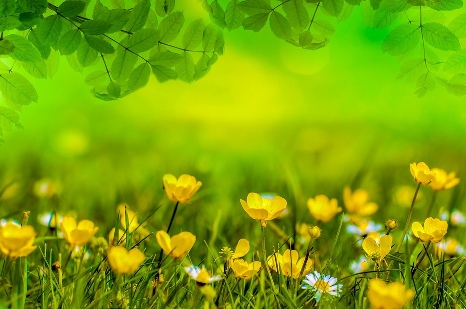 Spring background flower free photo on pixabay spring background flower field meadow easter mightylinksfo