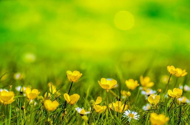 Spring Background Flower · Free photo on Pixabay