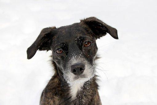 Dog, Portrait, Black, Snow, Face, Cute