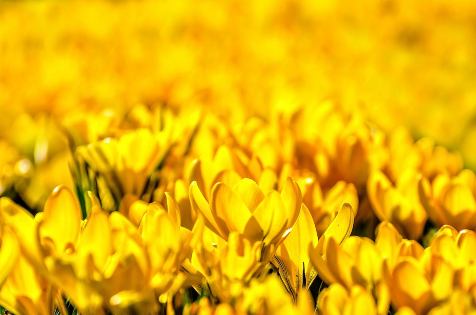 Flower Flowers Natural Nature Spring Background