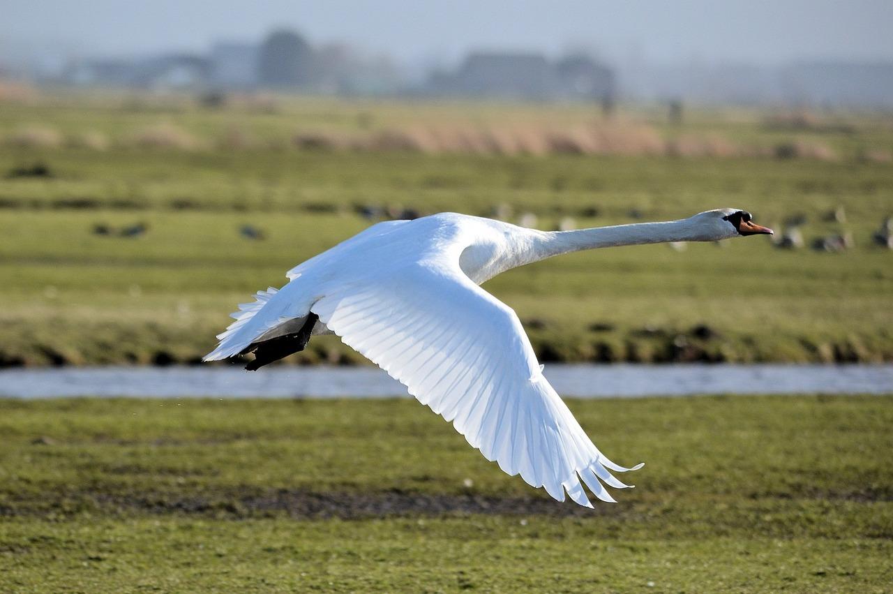 Трава лебеда фото схемы разновидностей