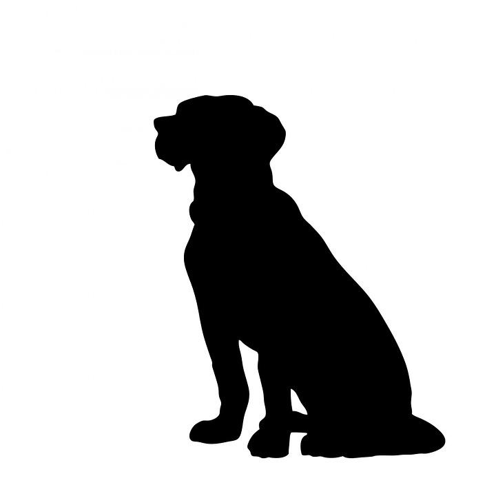 dog animal sitting big pet canine black