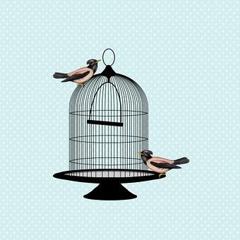 Vogel, Vögel, Jahrgang, Vogelkäfig