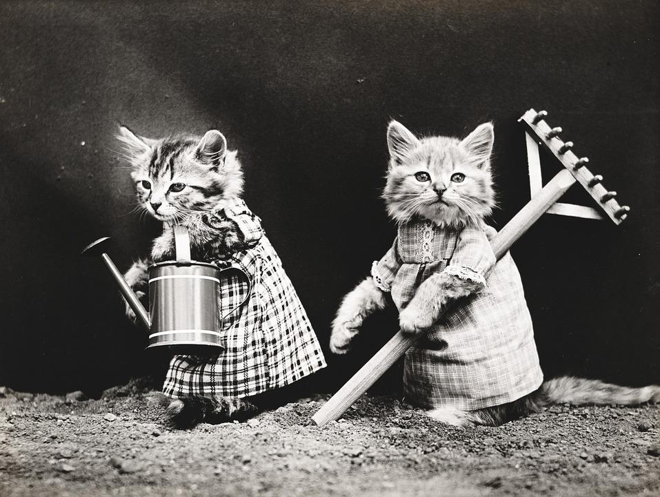 Cat Chats Chaton , Photo gratuite sur Pixabay