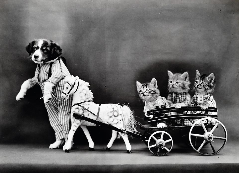 Perro llevando gatos como si fuera un niño
