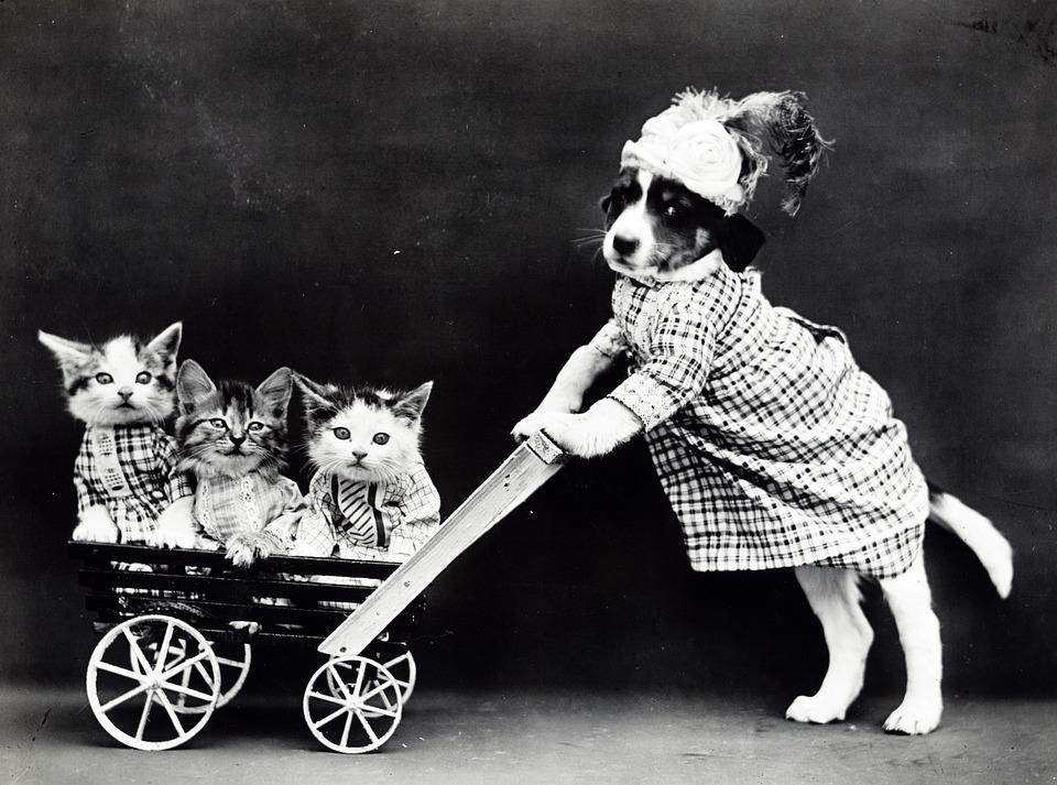 子猫, 猫, 犬, 子犬, かわいい, 服を着てください, 服を着たまま, ビンテージ, プッシュ, 乳母車