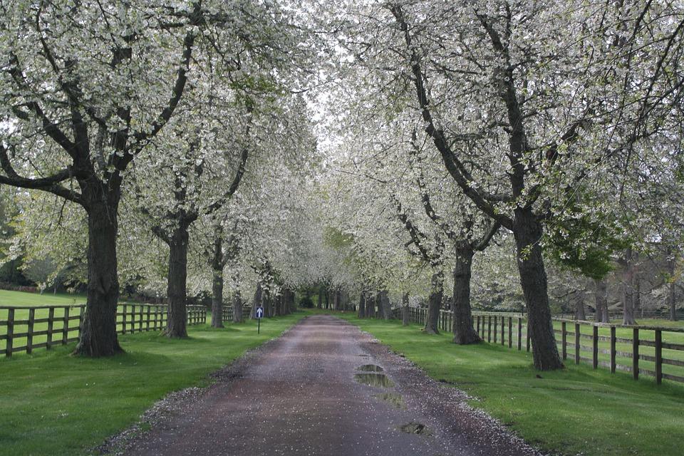 Pemandangan Alam Pohon Foto Gratis Di Pixabay