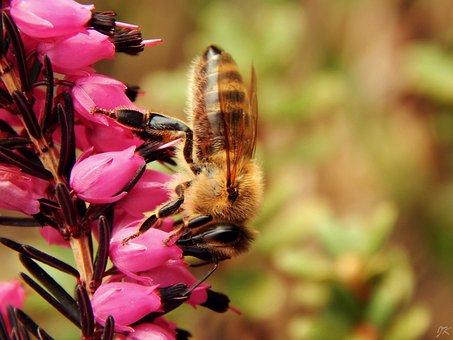 Bee, Macro, Spring, Nature, Garden