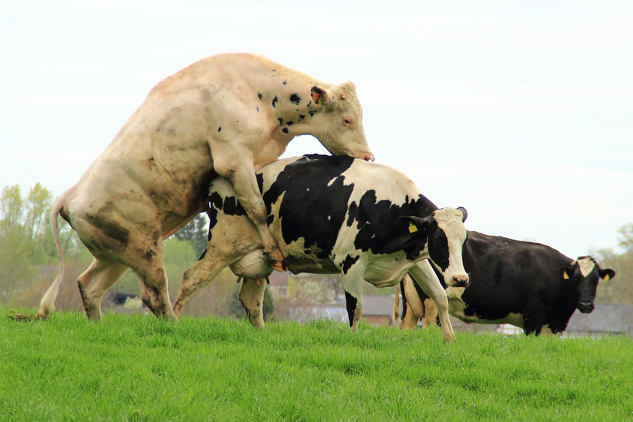 хочу быть шлюхой и дойной коровой