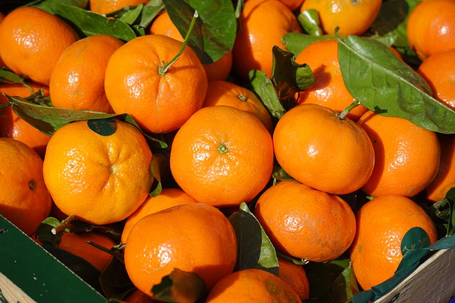 Orange Fruit Vector Free photo: Clementine...