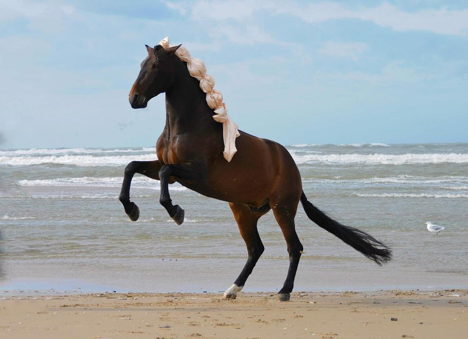 Photo gratuite cheval cheval cabr les chevaux image gratuite sur pixabay 319258 - Chevaux gratuits ...