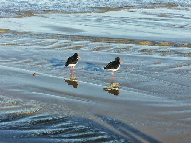 Photo gratuite animaux oiseau bord de l 39 eau image gratuite sur pixabay 319885 - Image animaux gratuite ...