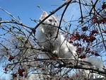 cat, tree, outdoors