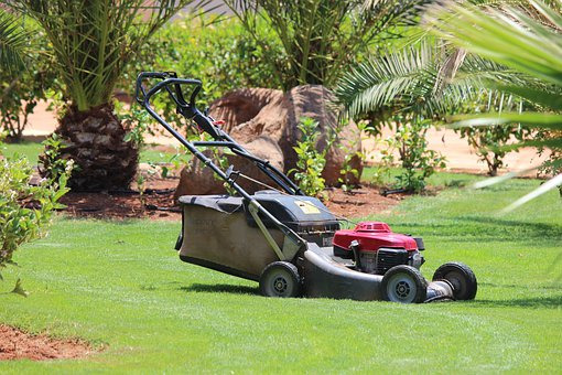 Lawn Mower, Lawn, Grass, Palm Trees