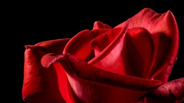 Rose Rouge Images Pixabay Telechargez Des Images Gratuites