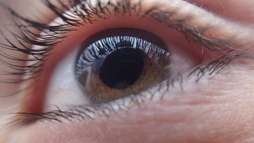 Eye, Human, Face, Vision, Look, Person, Eyeball, Iris
