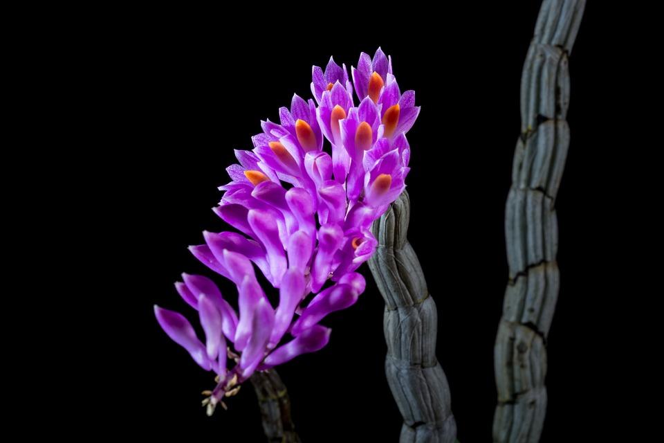 Wild Orchid Orchidea Kvet · Fotografia zdarma na Pixabay e61dd5cb71c