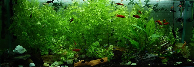 Free Photo: Aquarium, Fish, Ornamental Fish