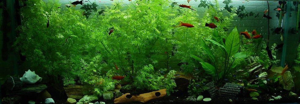 Aquarium Fish Images Pixabay Download Free Pictures