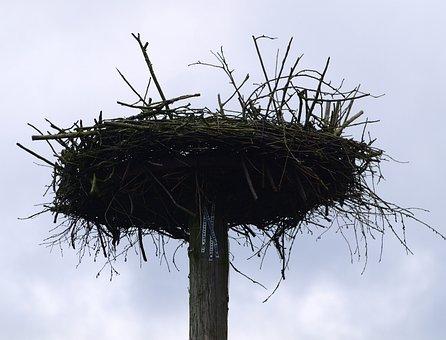 Storchennest, Vogel, Nest, Pfahl
