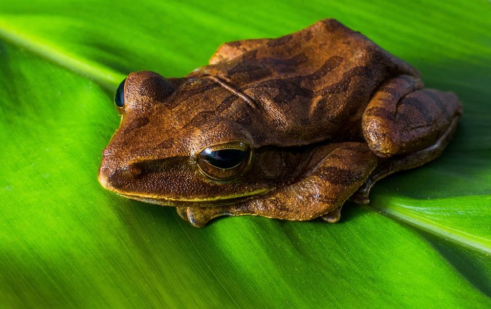 frog free images on pixabay