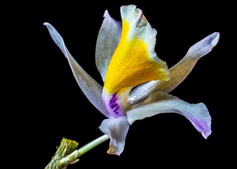 orchidée, sauvage - images gratuites sur pixabay