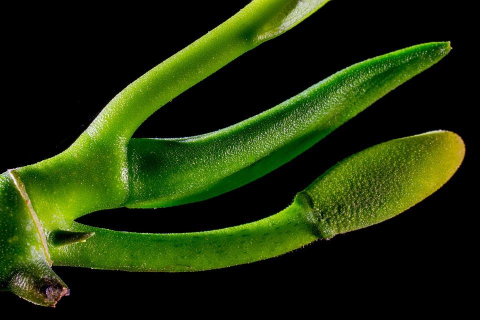 jack, fruit  free images on pixabay, Natural flower