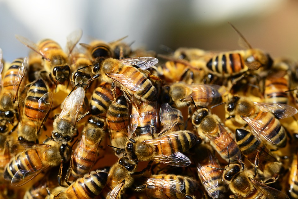honey bees beehive free photo on pixabay