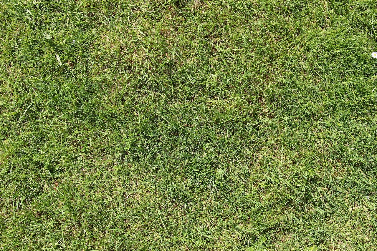 образом, трава скошена картинка язык зверей