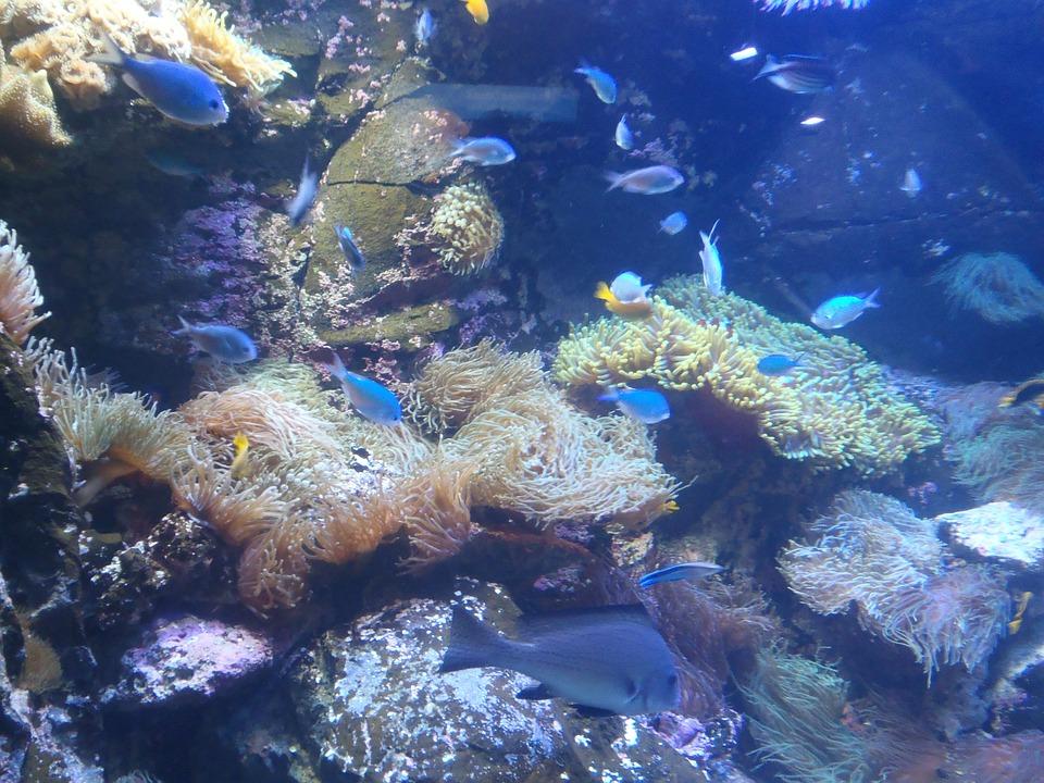 Mundo Submarino, Peces Exóticos, Vida Submarina, Buceo