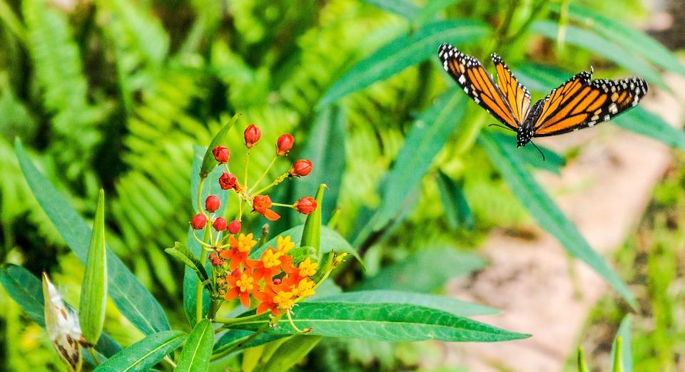 monarque papillon fleur papillons fleurs scarabe