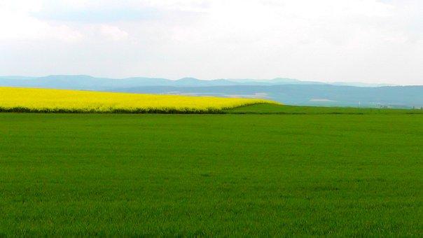 Spring Field, Spring, Oilseed Rape