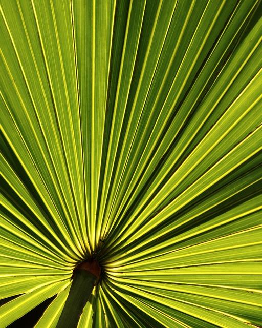 Palm Leaf Tropical 183 Free Photo On Pixabay