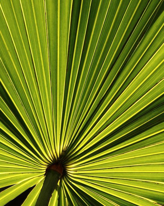 palm leaf tropical  u00b7 free photo on pixabay