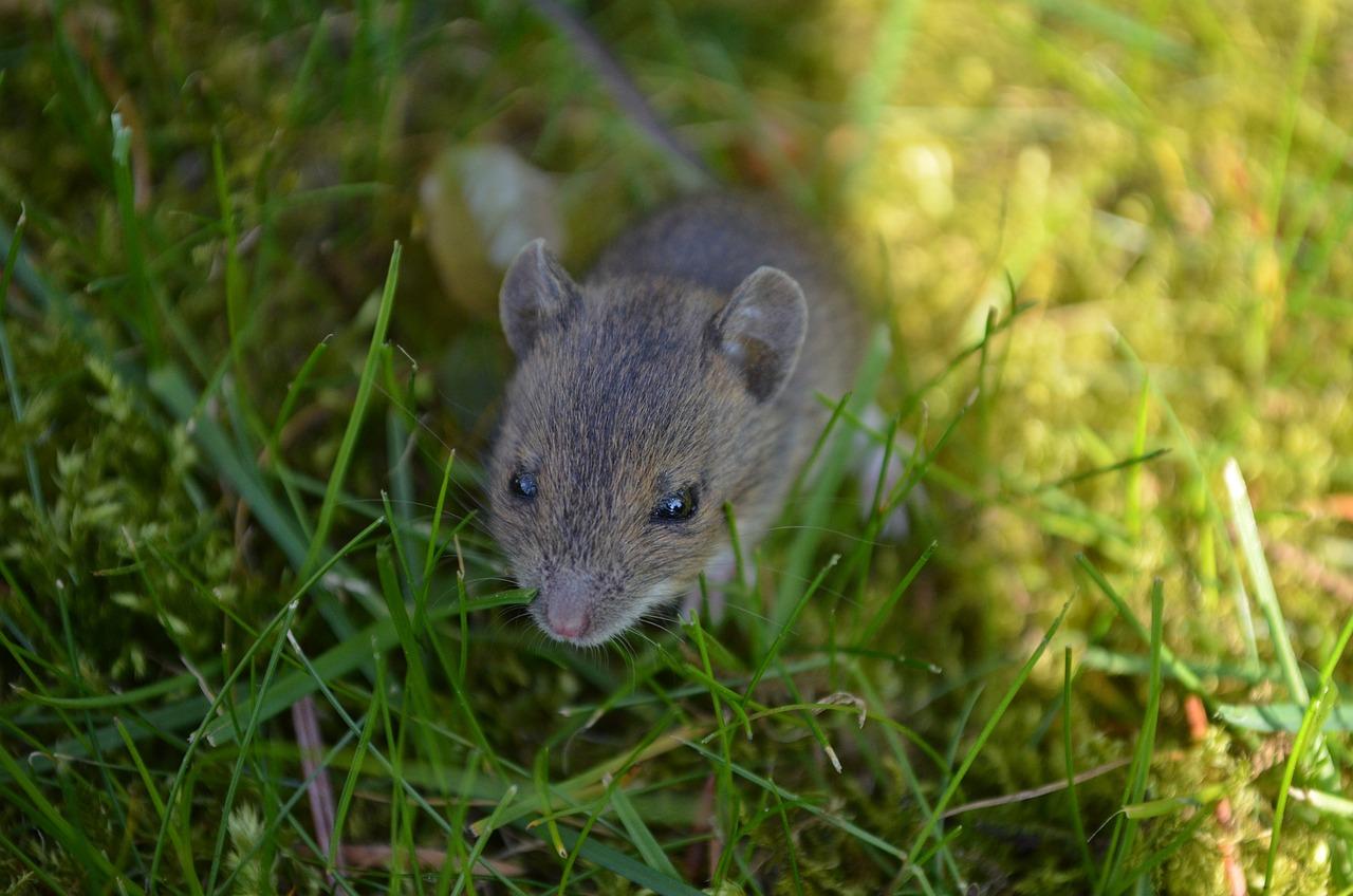 Зайчик и мышка картинки ценят