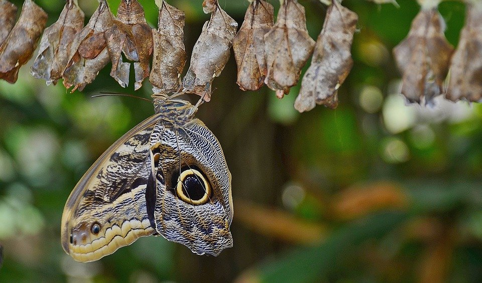 how to get rid of moth cocoons