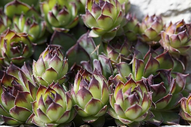 plantes grasses jardin de rocaille photo gratuite sur pixabay. Black Bedroom Furniture Sets. Home Design Ideas