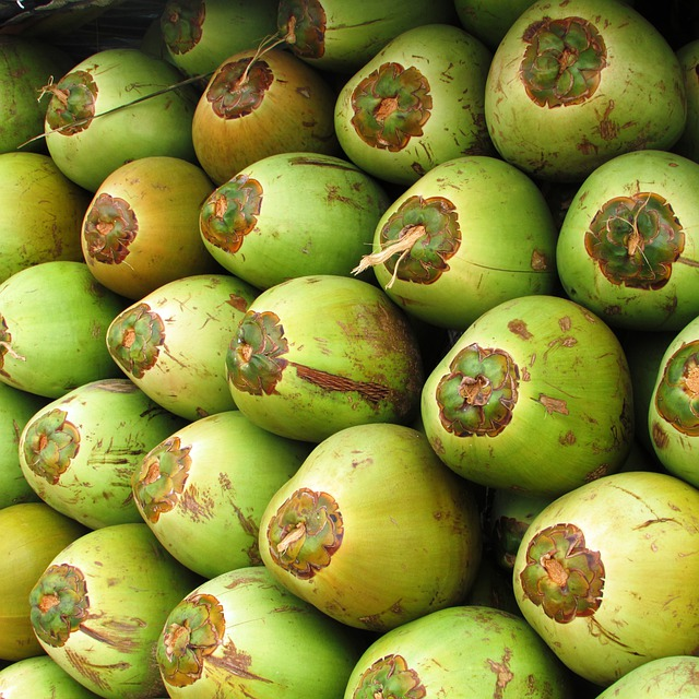 Free Photo Coconuts Fruit Coco Green Seed Free