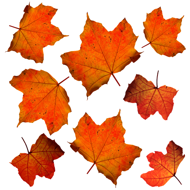 Fall Leaves Leaf · Free photo on Pixabay